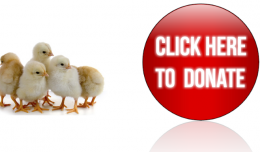 Donate-BABY PEEPS