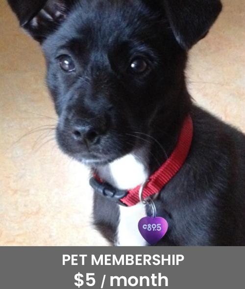 Pet Membership